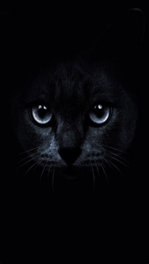 black cat  blue eyes wallpaper  images cat