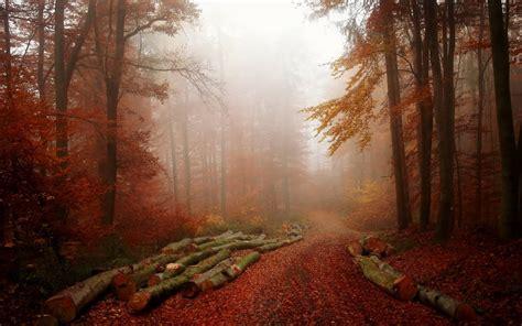 forest, Tree, Landscape, Nature, Autumn, Path, Fog, Road ...
