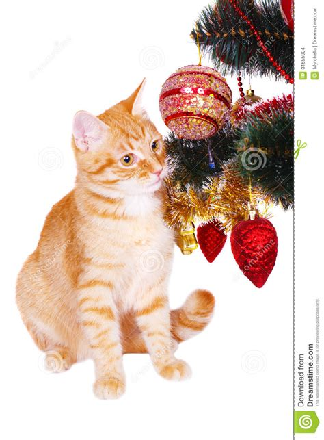 cat first seen christmas tree cat near the tree branches stock images image 31655904
