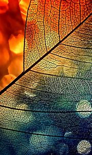 Bokeh Abstract Transparent Leaf Blue Orange Android ...
