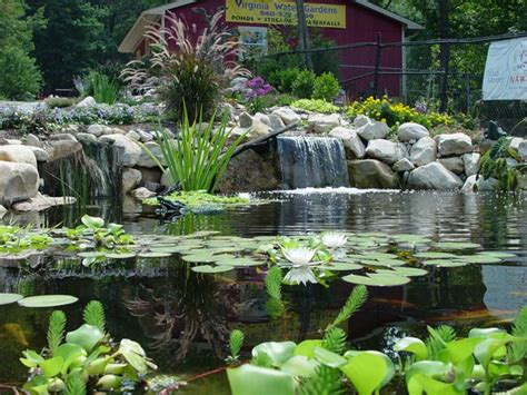 water garden in ohio call pond wiser at 330 833 frog