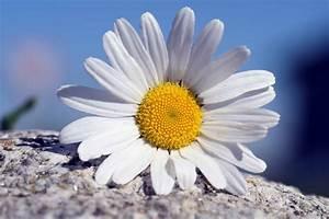 Ilmainen Kuva  Asetelma  Ulkona  Kes U00e4  Kukka  Flora