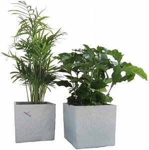 Palmen Kaufen Baumarkt : dominik zimmerpflanze palmen set h he 15 cm 2 pflanzen in dekot pfen online kaufen otto ~ Orissabook.com Haus und Dekorationen
