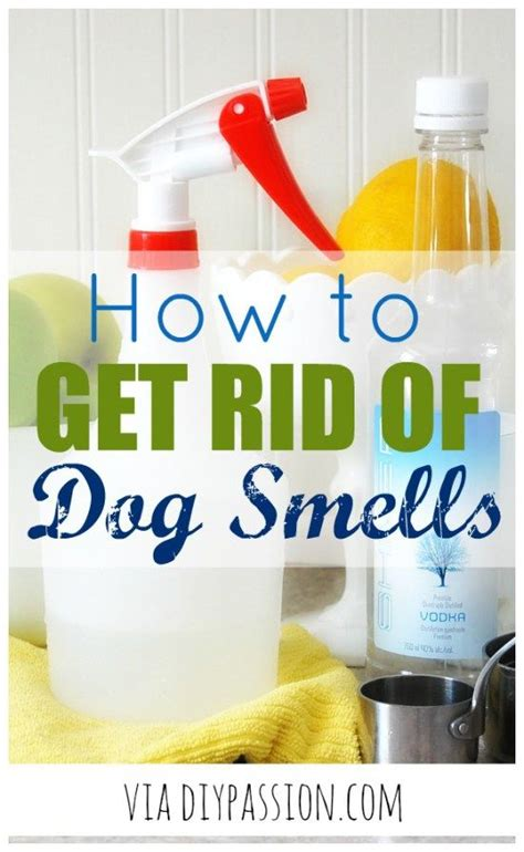 How To Get Dog Smells Out Of The Couch  Sprays, Diy And