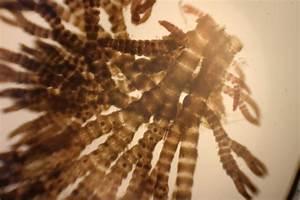 Brown algae - Lenscope.com