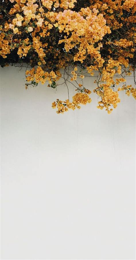 image result for yellow wallpaper iphone