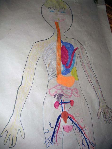 Umístění orgánů v lidském těle