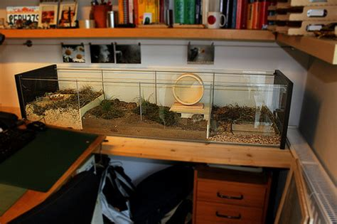 masterpost cheap cages  supplies  hamsters   care  hamsters