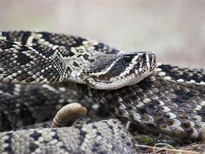 Politician In South Carolina Gets Flack For Shooting Snakes Ad