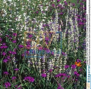 Beet Im Garten : details zu 0003172387 garten gartrengestaltung ~ Lizthompson.info Haus und Dekorationen