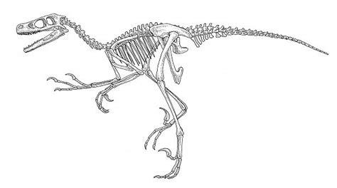 Animali Da Cortile Da Colorare by Il Pollosauro Dinosauro Da Cortile 5 Di 6 Repubblica It