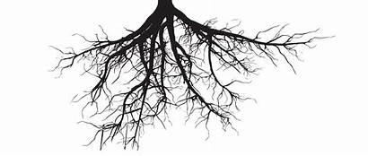 Roots Trees Tree Ollo