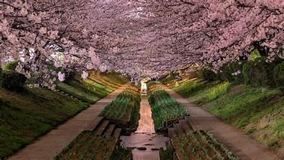 Desktop Japanese Wallpapers Japan Cherry Definition Blossoms