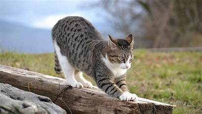Funny Animal Cat Action Wallpapers Stretching Wild