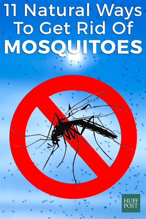 How To Get Rid Of Mosquitoes Testing 11 Homemade Remedies