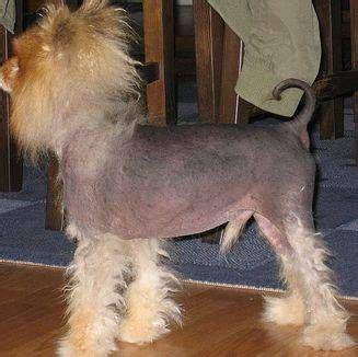 natural ways  treat cushings disease  dogs cushing