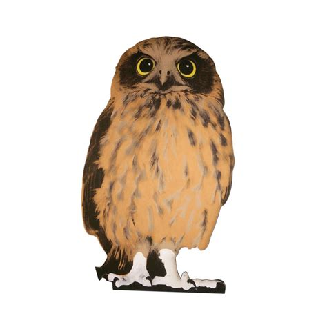are owls pets cardboard flat pet owl by garudio studiage notonthehighstreet com