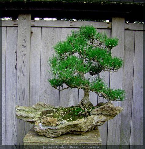 japanese garden bonsai japanese garden 11 bonsai by andyserrano on deviantart