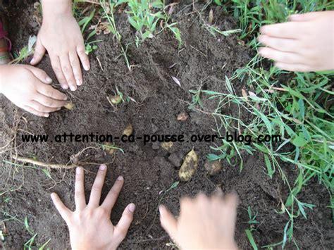 planter des pommes de terre attention 231 a pousse