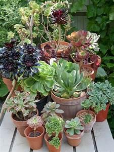 Mini Succulente Pas Cher : succulent plants diy ~ Teatrodelosmanantiales.com Idées de Décoration