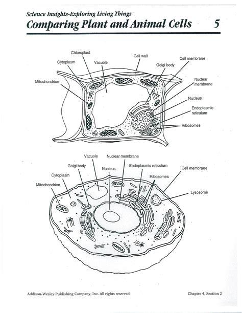 printable plant  animal cell plantandanimalcell