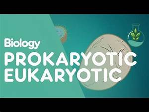 Prokaryotic Vs Eukaryotic  The Differences Video For 9th