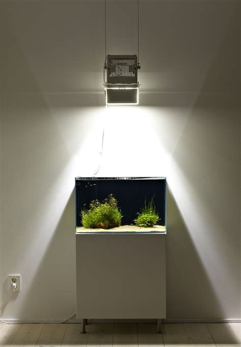 Okeanos Aquascaping by Less Is More Declutter With Aquarium Minimalism Okeanos