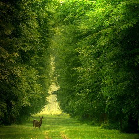 Green Forest Picture by Amazing Autumn Forests 15 Photos My Modern Met