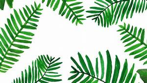 Tropical Palm Leaf Wallpaper (24+ images)