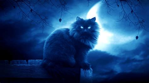 cat backgrounds wallpapers images design trends