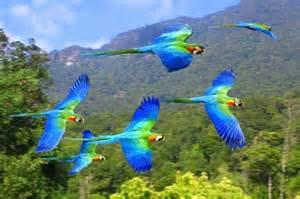 Parrot Rainforest Birds Flying