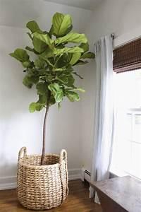 Pflanzen Für Wohnzimmer : kleine geschichte ber das wohnen mit pflanzen sweet home ~ Markanthonyermac.com Haus und Dekorationen