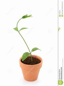 Pianta Che Cresce Da Un Vaso Immagine Stock