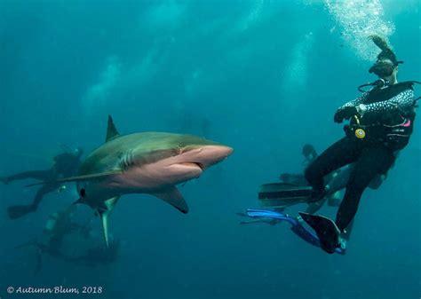 usa scuba diving website for