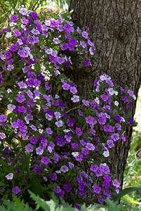Schattenpflanzen Garten Winterhart : farbenfrohe schattenpflanzen f r ihren garten ~ Lizthompson.info Haus und Dekorationen