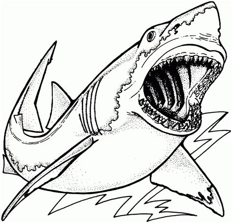 Realistic Sea Animals Coloring Pages Images For