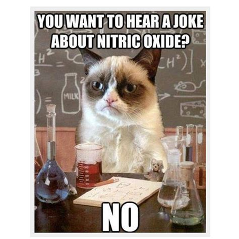 How To Make A Grumpy Cat Meme - cat memes tumblr www imgkid com the image kid has it