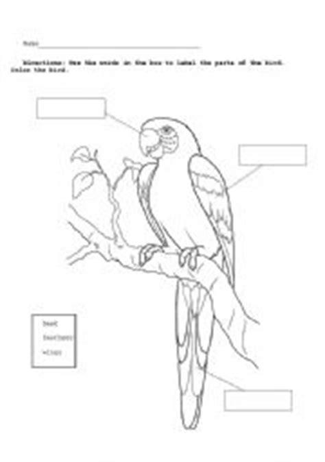 english worksheets parrot diagram