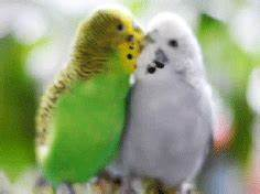 Bird Love GIF - Find & Share on GIPHY