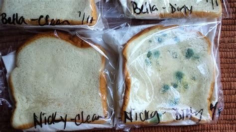 Moldy Bread Science Experiment! Wash your Hands