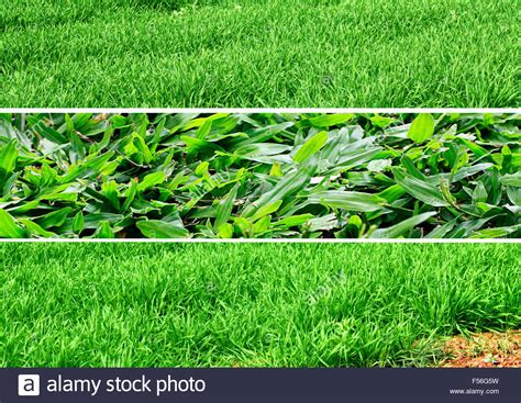 Grasses Three Different Types Of Lush Green Lawn Stock