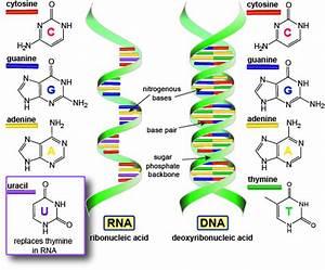 Biology The Genetic Code