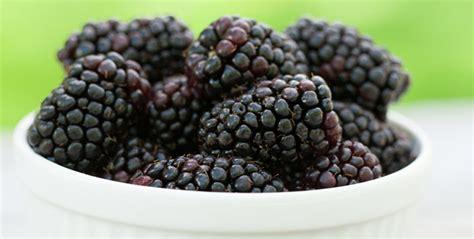 fresh blackberries hurst berry farm