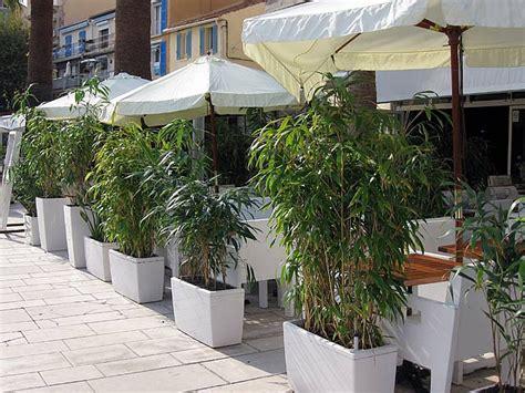 Ganzjahres Pflanzen by Chinaschilf Als Sichtschutz Im K 252 Bel Awesome Sichtschutz