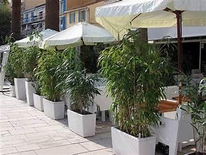 bambus als sichtschutz fur die gastronomie kaufen With französischer balkon mit große lavasteine garten kaufen