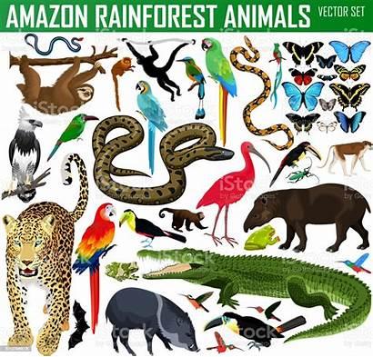 Rainforest Jungle Animals Vector Animal Illustration Clipart