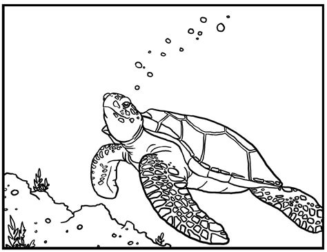 printable sea turtle coloring pages  kids