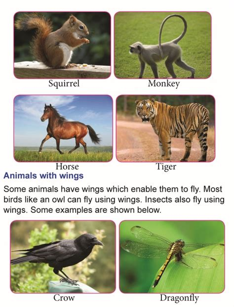 grade  science lesson  body parts  animals primary