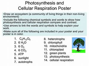 Compare The Chemical Equations For Photosynthesis And