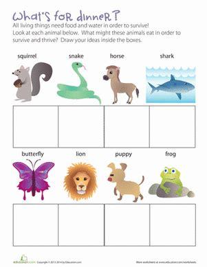 what animals eat worksheet education
